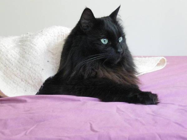 Princessy Cat Poster