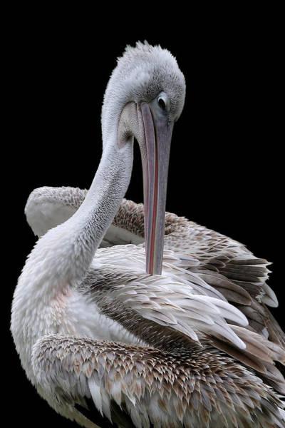 Prospecting - Pelican Poster