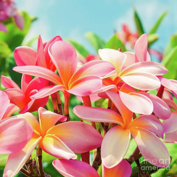 Pua Melia Ke Aloha Maui Poster