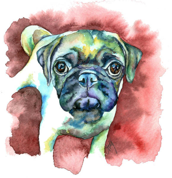 Pug In Red Poster