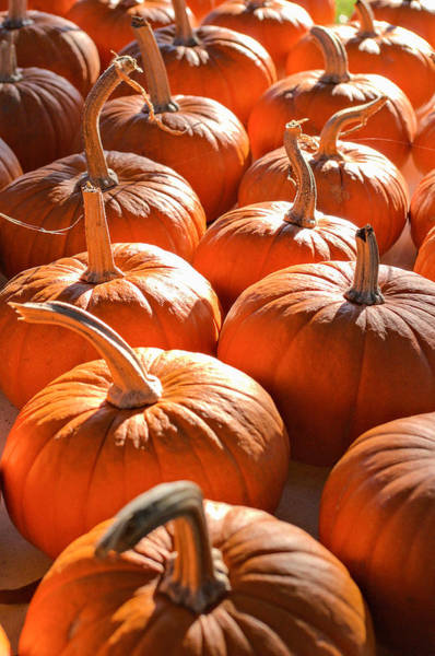 Pumpkin Patch Poster