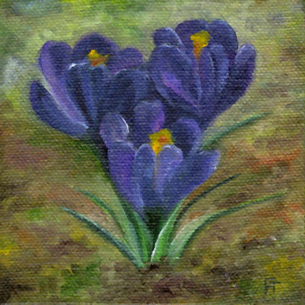 Purple Crocus Poster