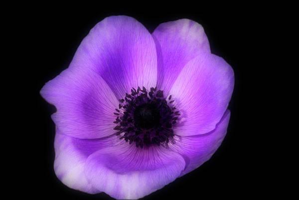 Purple Flower Head Poster