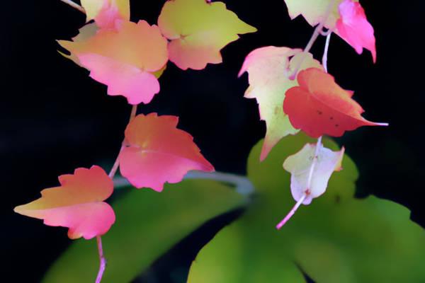 Rainbow Vine Leaves Poster