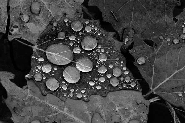 Raindrops On Leaves Poster