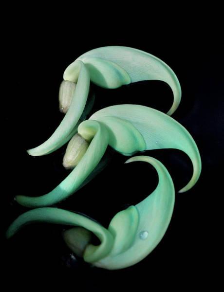 Rare Orchid Petals Poster