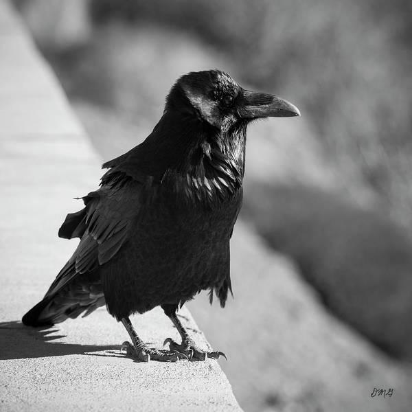Raven Iv Bw Poster