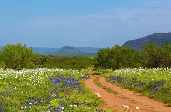 Red Dirt Road With Wild Flowers Poster