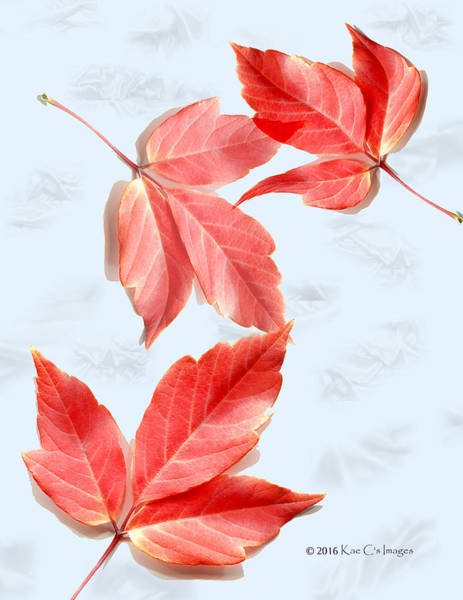 Red Leaves On Blue Texture Poster