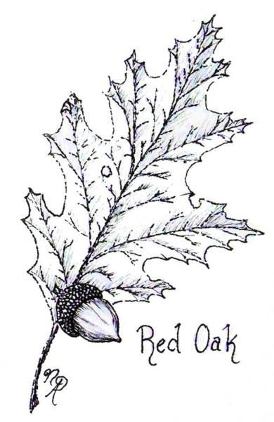 Red Oak Leaf And Acorn Poster