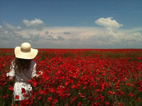 Red Poppies And Lady Poster