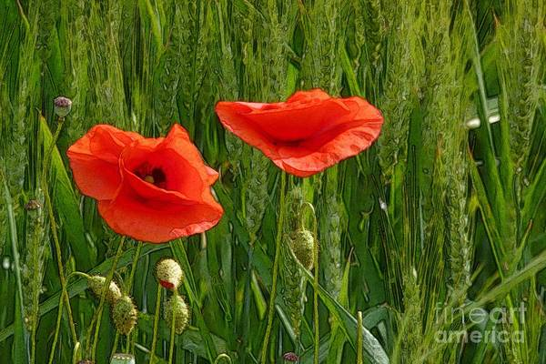 Red Poppy Flowers In Grassland 2 Poster