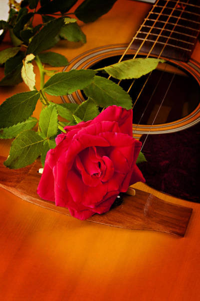 Red Rose Natural Acoustic Guitar Poster