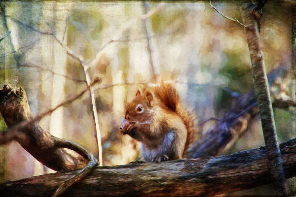 Red Squirrel With Pinecone Poster