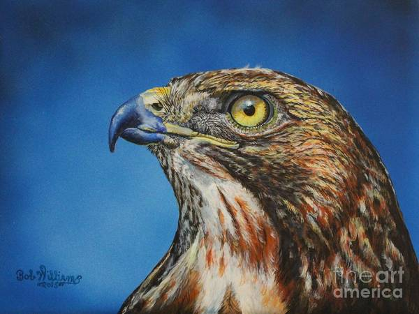 Red-tailed Hawk......honor Poster