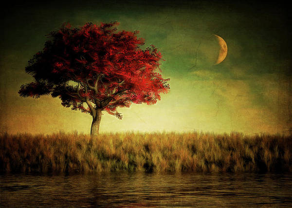 Red Tree With Moonrise Poster