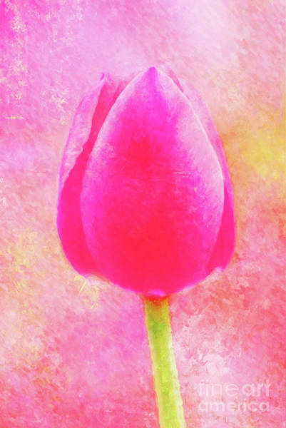 Red Tulip Dressed For Spring Poster