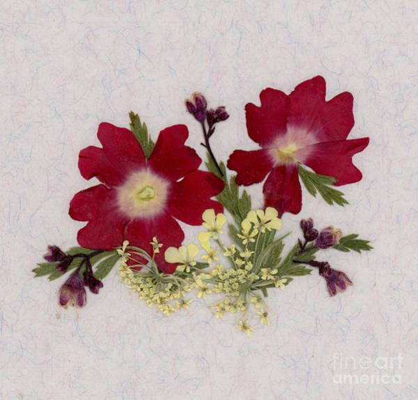 Red Verbena Pressed Flower Arrangement Poster