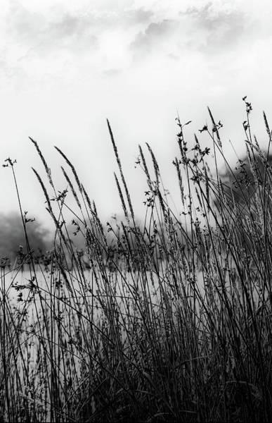 Reeds Of Black Poster