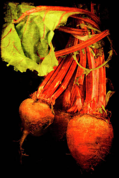 Poster featuring the photograph Renaissance Beetroot by Jennifer Wright