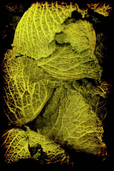 Poster featuring the photograph Renaissance Chinese Cabbage by Jennifer Wright