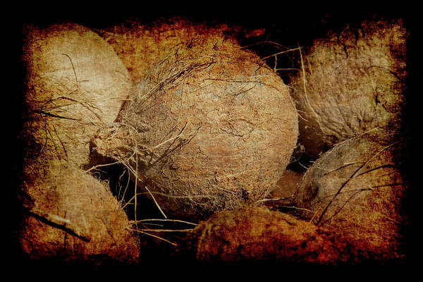 Poster featuring the photograph Renaissance Coconut by Jennifer Wright