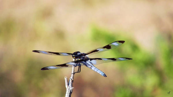 Rest Area, Dragonfly On A Branch Poster