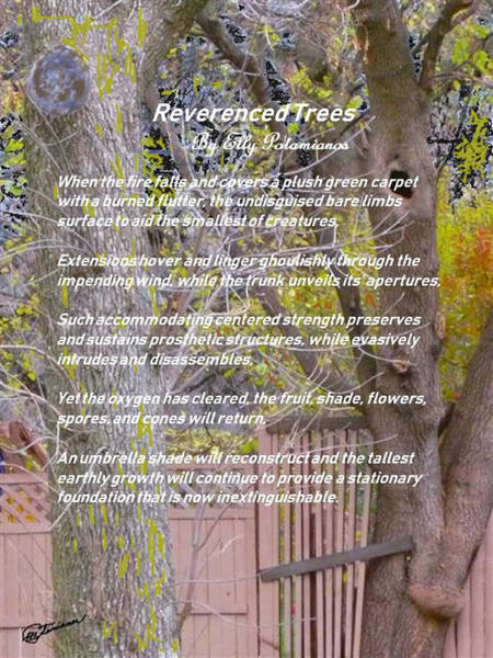 Reverence Of Trees Poster