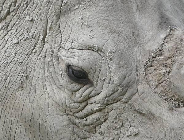 Rhino Eye Poster