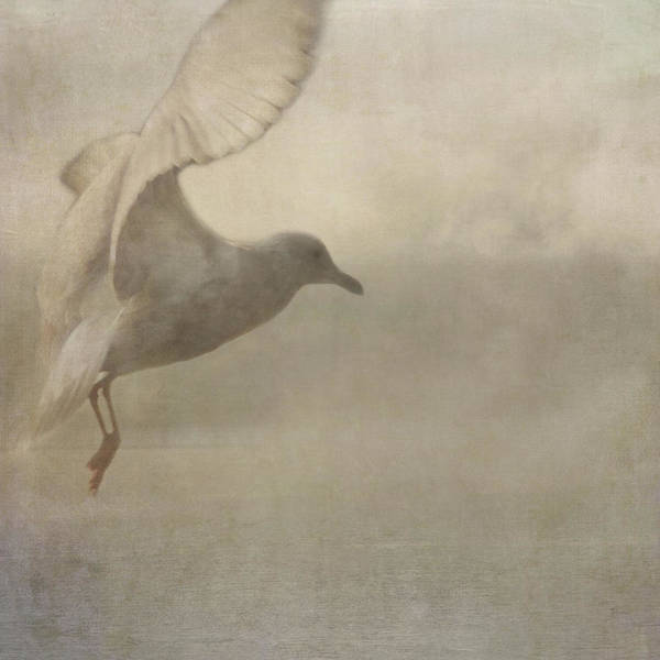 Rising Mist Poster