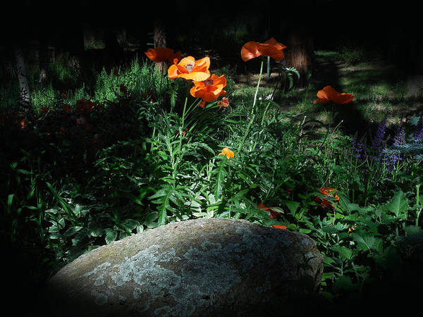 Rocky Mt. Poppies  Poster