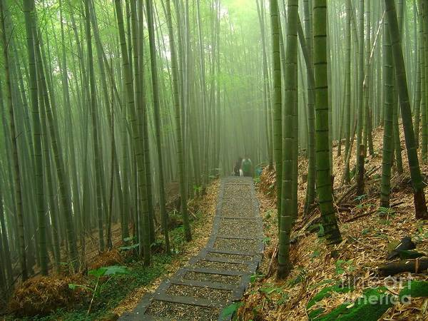 Romantic Bamboo Forest Poster