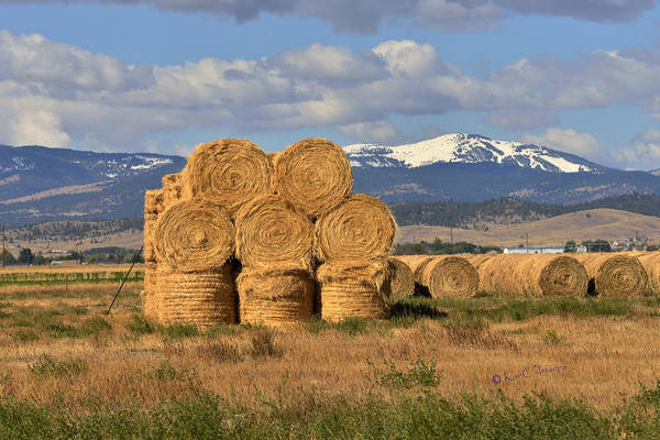Round Hay Bales And Mountain Poster