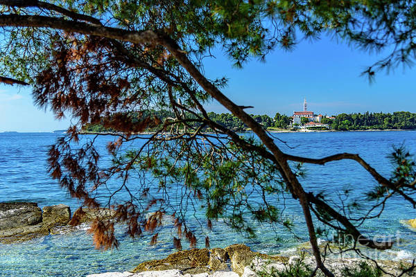 Rovinj Old Town Accross The Adriatic Through The Trees Poster