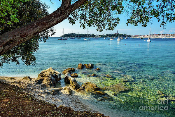 Rovinj Old Town, Harbor And Sailboats Accross The Adriatic Through The Trees Poster