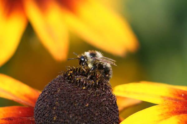 Rumble Bee Poster