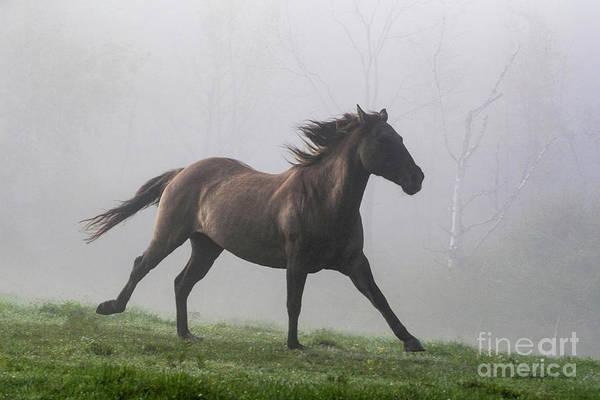 Running Through The Fog Poster
