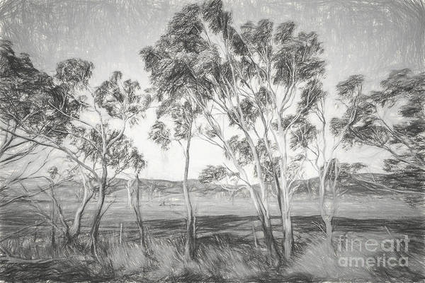 Rural Landscape Pencil Sketch Poster
