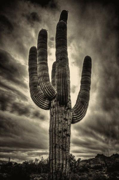 Saguaro And Storm Clouds Poster