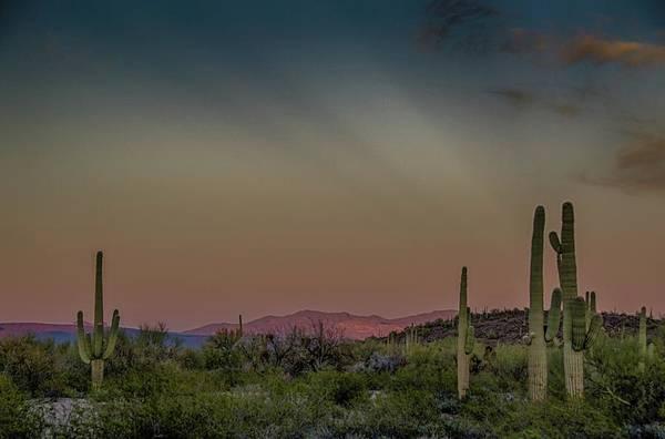 Saguaros Salute Rays Rising Poster