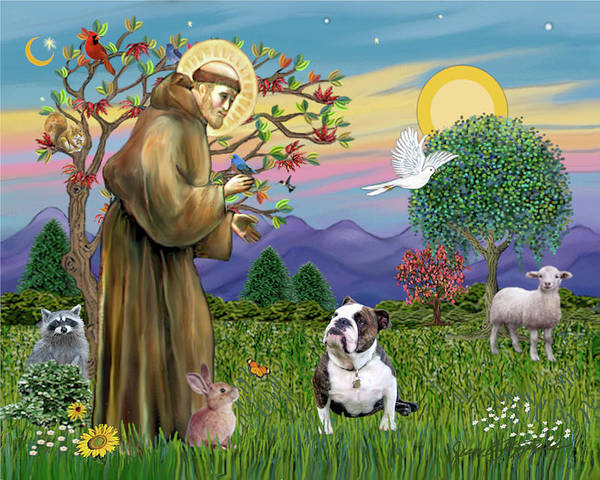 Saint Francis Blesses A Brown And White English Bulldog Poster