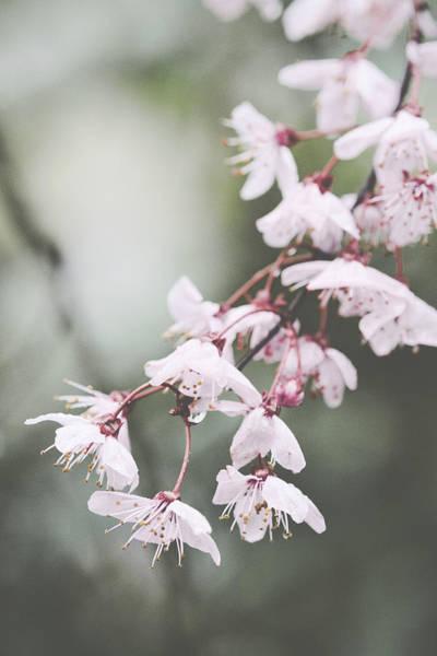Sakura #278 Poster