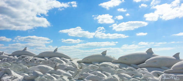 Sand Dolphins At Siesta Key Beach Poster