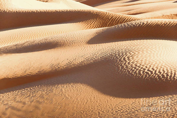 Sand Dunes 1 Poster