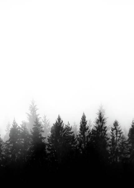 Scandinavian Forest Poster