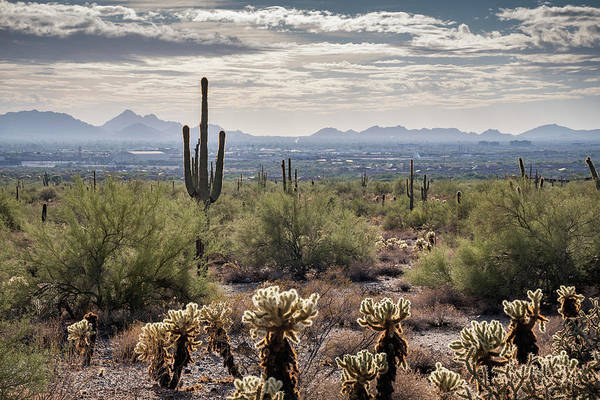 Scottsdale Arizona Poster