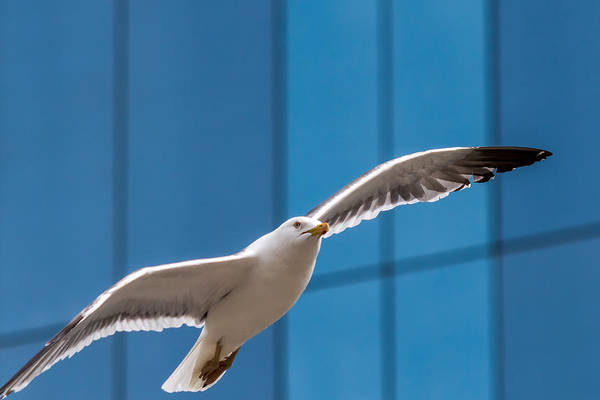 Seabird Flying On The Glass Building Background Poster