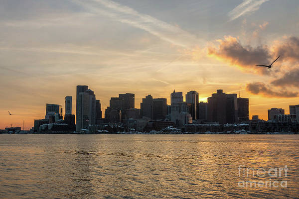 Seagull Flying At Sunset With The Skyline Of Boston On The Backg Poster