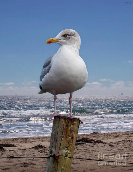 Seagull On The Shoreline Poster