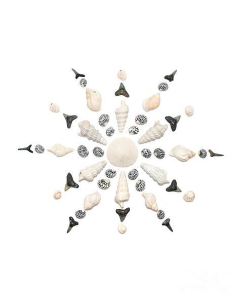 Seashell Snowflake 3 Poster